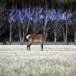 Deer in a forrest - Stock Photo