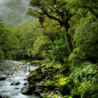 Lush rainforest - Stock Photo