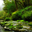 Lush rainforest — Stock Photo #3373958