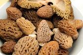 Cogumelo morel — Fotografia Stock