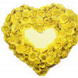 Coltsfoot's heart — Stock Photo