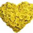 Coltsfoot's heart — Stock Photo #2889596
