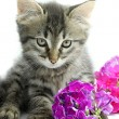 Kitten with flowers — Stock Photo