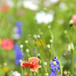 Summer flowers on field — Stock Photo #2720442