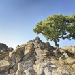 Single tree on rocks - Stock Photo