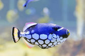 Colorful butterfly-fish in a aquarium — Stock Photo