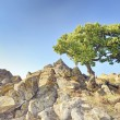 Stock Photo: Single tree on rocks