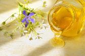 Honey flow — Stock Photo