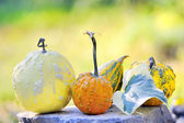 Harvested pumpkins — Stock Photo
