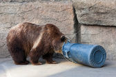 Bear and Trash Can — Stock Photo