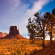 Junipers in Monument Valley - Stock Photo