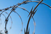Barbed Wire Abstract — Stock Photo