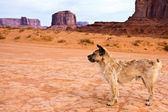 Stray Dog in Monument Valley — Stock Photo