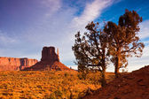 Junipers in Monument Valley — Stock Photo