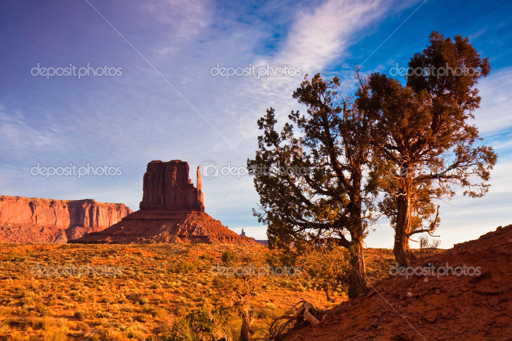 Juniper trees on an early morning in Monument Valley, Utah. — Stock Photo #2766965