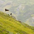 Stock Photo: CaliforniLandscape with Vultures