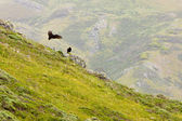 California Landscape with Vultures — Stock Photo