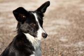 Perro callejero guiñando un ojo — Foto de Stock