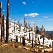 Dead Forest — Stock Photo