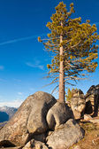 Pine en rotsen — Stockfoto