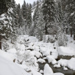 Forest Creek in Winter — Stock Photo