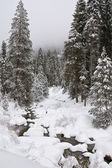 Winter in Sequoia National Park — Stock Photo