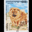 Chow chow — Stock Photo #2840423