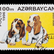 Stock Photo: Basset hounds
