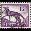 Tasmanian tiger - Stock Photo