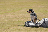 Dog in the park — Stock Photo