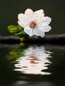 Jarní květina — Stock fotografie