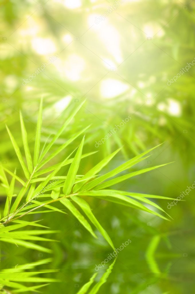 Bamboo forest with ray of lights and water reflections  Stock Photo #3163301
