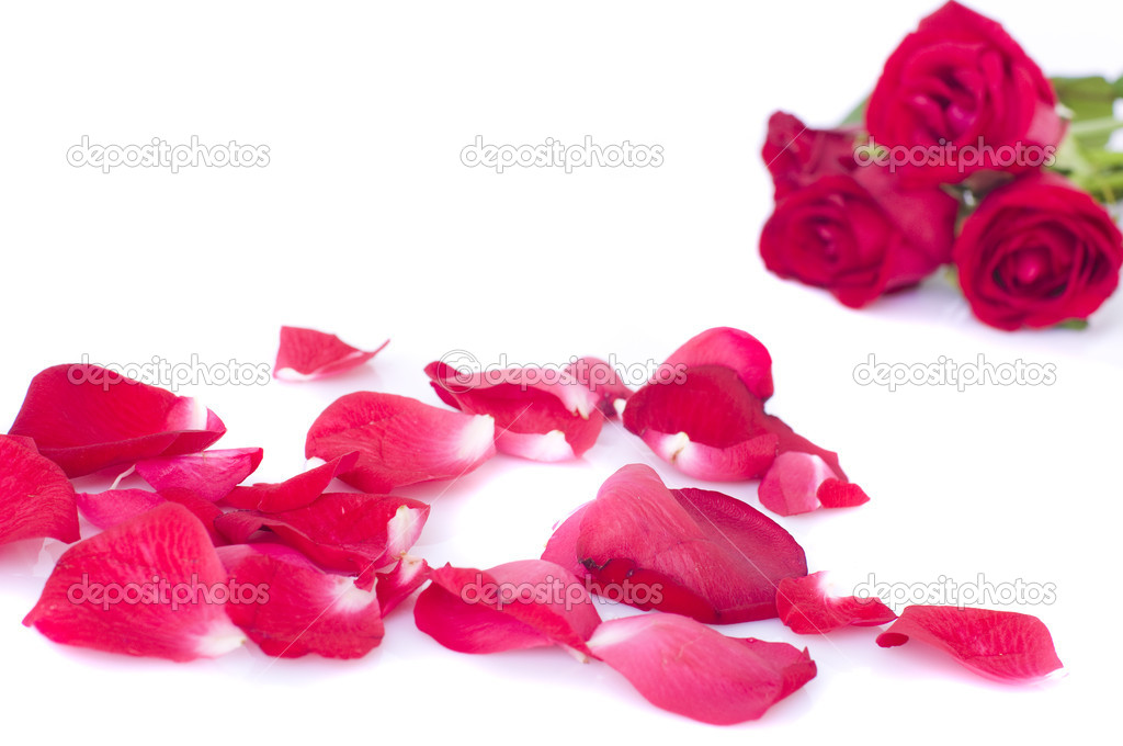Studio close up shot of red rose flower and petals  — Stock Photo #3208430