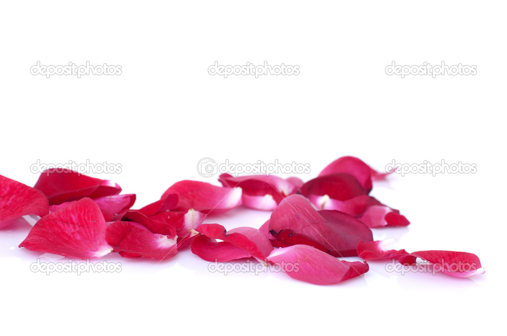 Close up photo of rose petals with isolated white background — Stock Photo #3905735