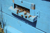 The worker bees in the hive blue — Stock Photo