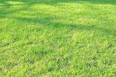 Beautiful garden lawn — Stock Photo