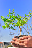 Planting the tree — Stock Photo