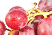 Juicy grape — Stock Photo
