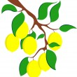 Lemon — Stock Vector #3259032