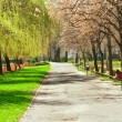 Alley in park — Stock Photo #2859007