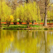 Stock Photo: Willows reflecting in water