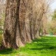 Line of trees — Stock Photo