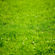 Grass shot with selective focus — Stock Photo #2859046