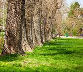 Line of trees — Stock Photo