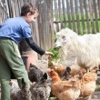 Country boy feeding the animals — Stock Photo