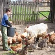 Country boy feeding the animals - Stock Photo