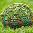 Royalty-Free Stock Photo: Basket with clover
