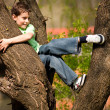 Boy climbing in trees — Stock Photo #2894567