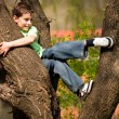 Boy climbing in trees — Stock Photo