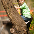 Boy climbing in trees — Stock Photo #2894573
